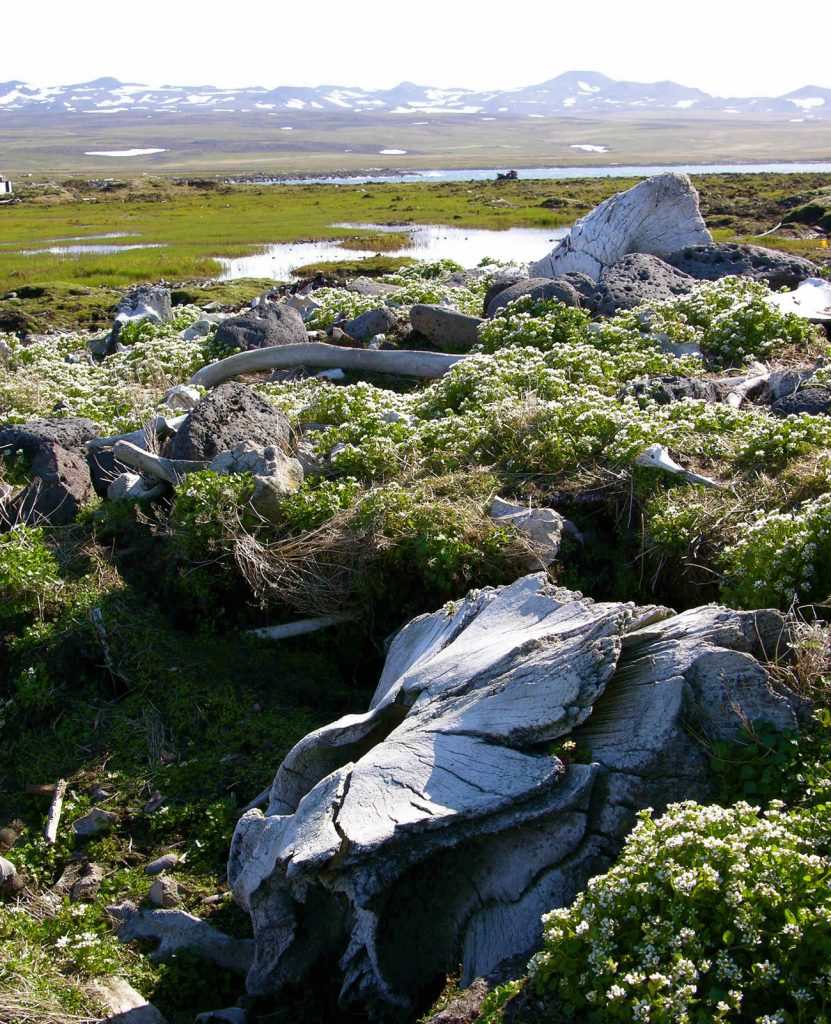 St. Lawrence Island Alaska